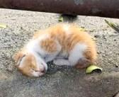 道路脇で衰弱していた子猫。夫婦のとっさの行動で元気を取り戻すと、甘えん坊な姿を見せてくれた (*´ω`*)