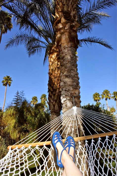 hammock parker palm springs palm tree