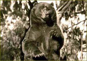 monarch grizzly bear california state bear flag