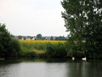 saone-fields0001