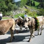 Near Triesenberg, Liechtenstein