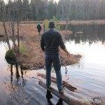 Walking on  Sphagnum Moss