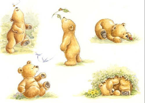 Urso Curioso