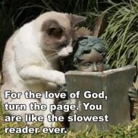 Impatient Reading Cat