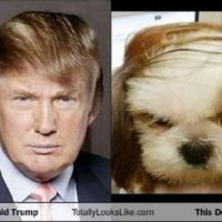 Donald Trump totally looks like...