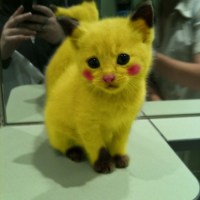 Pokemon Pikachu Cat