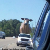 Surprise in rear view mirror