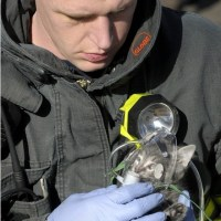 Firefighter gives cat oxygen