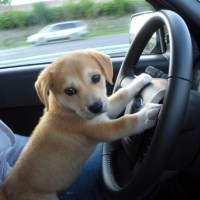Warning: Cute Driver