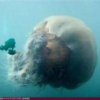 Mega Jellyfish