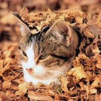 Cats love fall