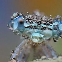 Cool Pic: Dew bugs fascinate you?