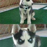 Scary Dog: Go for a run