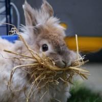 CrAAzY bunny