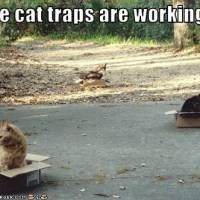 How to make an effective cat trap