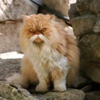 Classy moustache cat