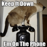 Keep it down, I'm on the phone!