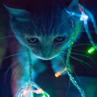 Kitten in beautiful lights