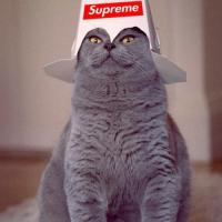 Supreme cat leader