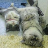When cats have long days