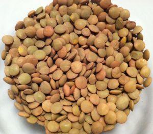 dry-lentils