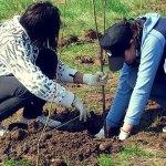 plantam-fapte-bune-romania