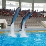 delfini-delfinariu