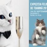 expozitie-pisici