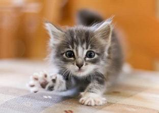 adorable-baby-cat-cute-kitten-favim-com-284524
