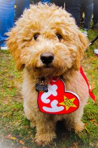 Halloween Costume Ideas For Dogs - Festival Around the World