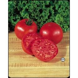 Small Crop Of Big Boy Tomato