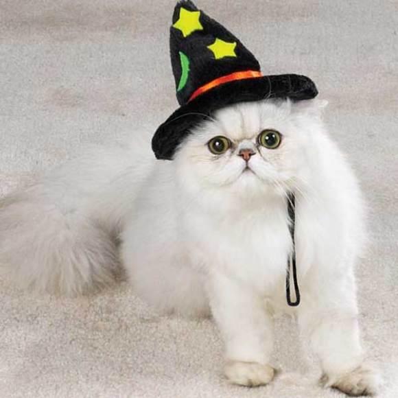 キュン,帽子,ネコ,画像,まとめ010