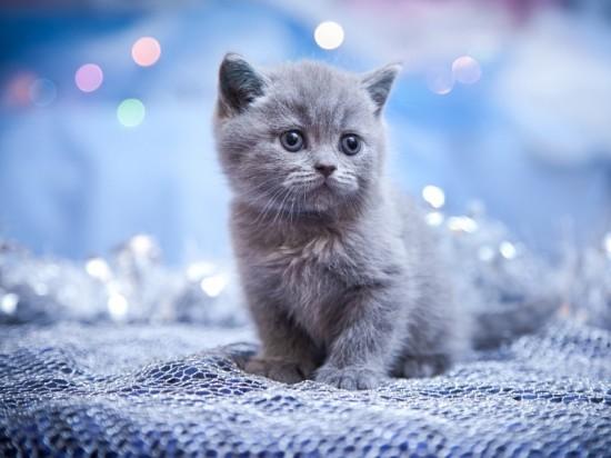 可愛く,子猫,画像00001 (24)