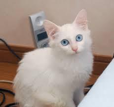 うっとり,猫,まん丸,目,美しすぎる,画像060