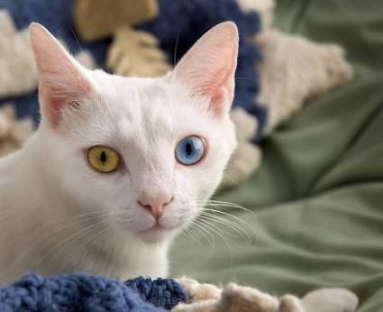 うっとり,猫,まん丸,目,美しすぎる,画像067