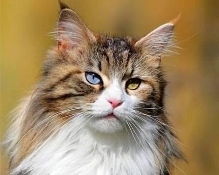 うっとり,猫,まん丸,目,美しすぎる,画像084