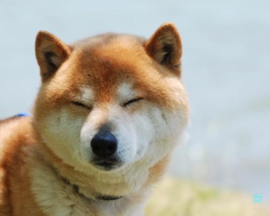 癒される,癒し犬,画像086