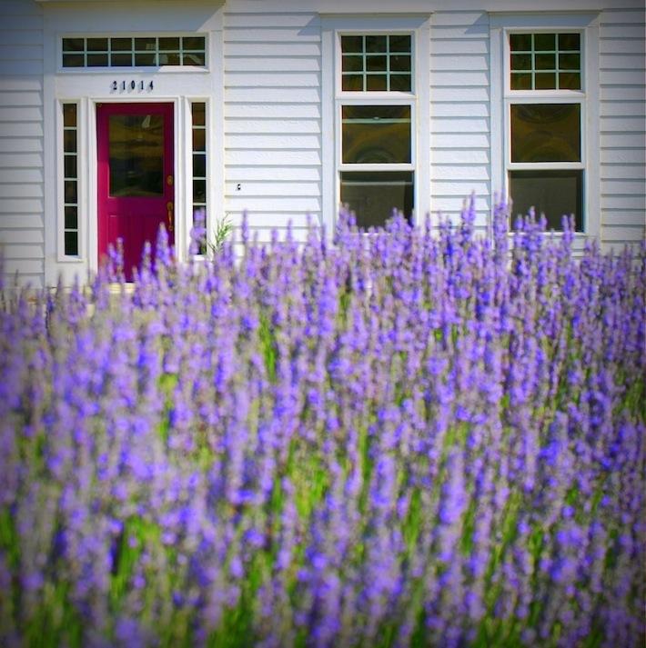 Farmhouse in Lavender