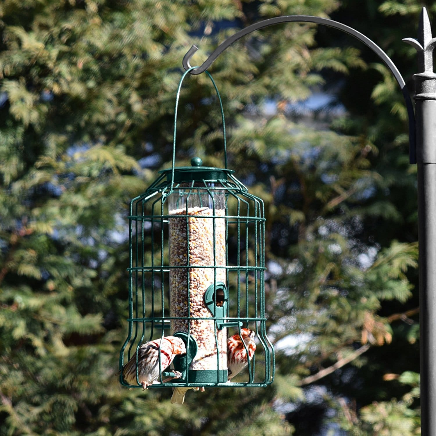Diy Bird Feeder Cage Graybunny Caged Tube Bird Feeder Review
