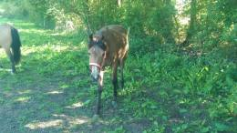 Bringing on a Foal