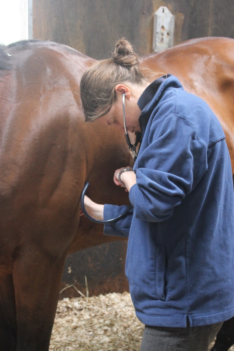 Always keep your horse insurance details to hand says BEVA