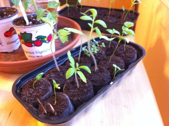 Seed Update – Everything Is Homemade