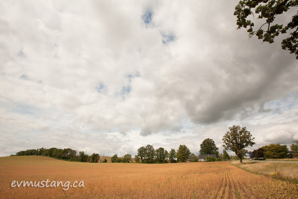 image of a soy field at the end of summer after a rain after a drought
