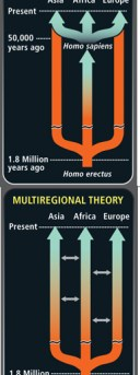 Out of Africa and Multi-regional model