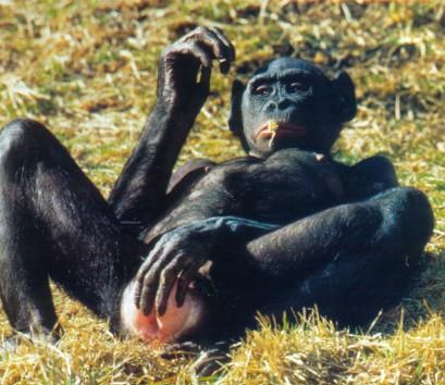 gorilla sex