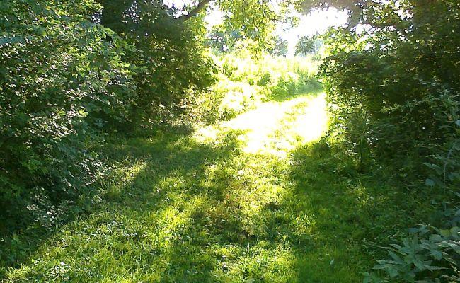 Woods Walking Inspirations | Woods Walking