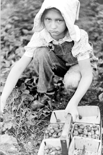 Migrant strawberry picker, Berrien County, Michigan; photographed by John Vachon July 1940