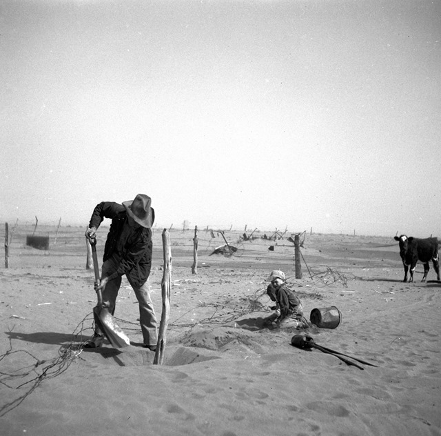 DDD - Dust bowl farmer raising fence to keep it from being buried under drifting sand 8b38287a