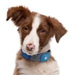 digital pet gadgets