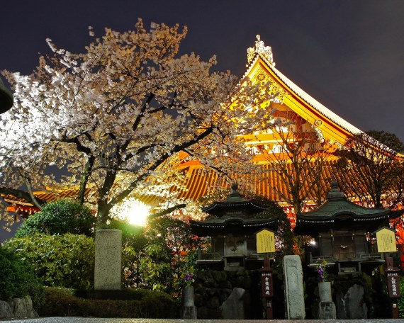 夜桜 浅草